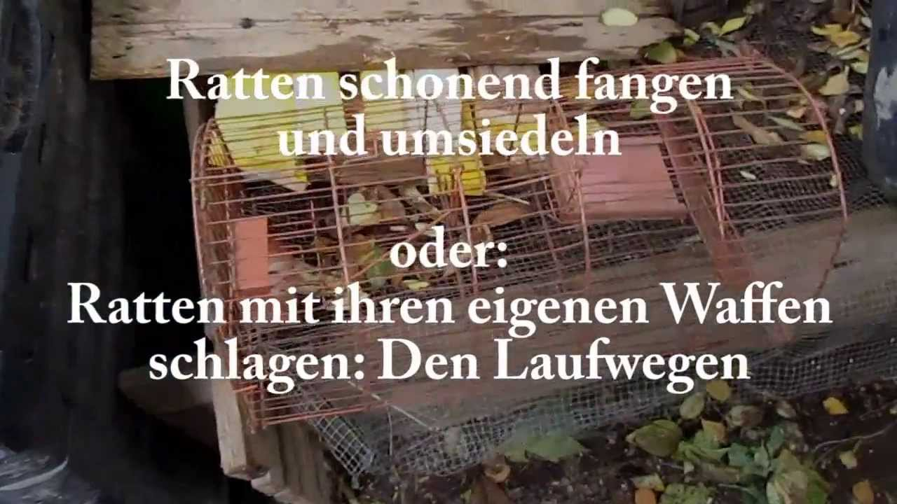 Ratten Lebend Fangen Superspezial Trick Youtube