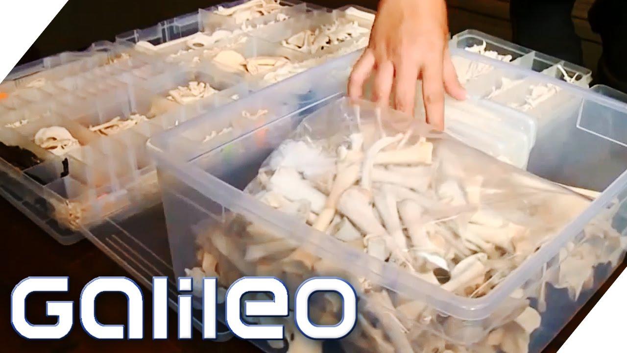 Die Knochensammlerin | Galileo | ProSieben