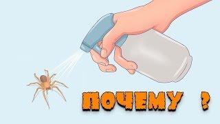 видео Почему нельзя убивать пауков в доме?