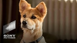 Video ANNIE Movie (2014) - Meet Sandy the Dog download MP3, 3GP, MP4, WEBM, AVI, FLV November 2017