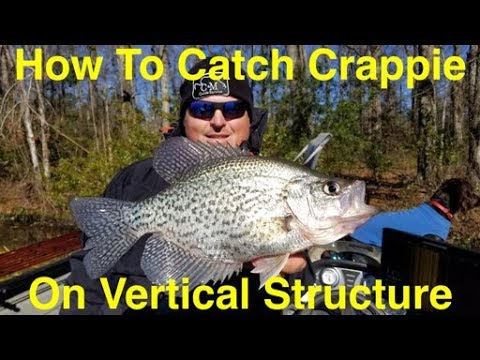 How To Catch Crappie On Vertical Structure