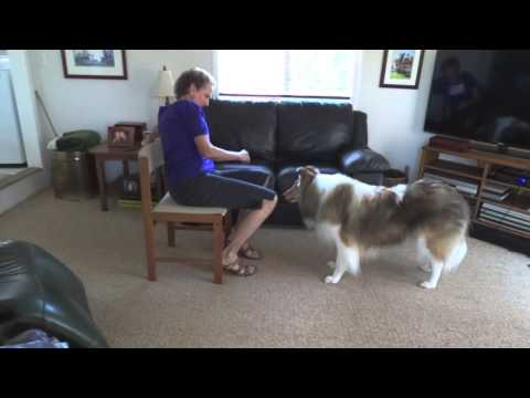 Teach 'Which One', dog tricks, collie, dog, game