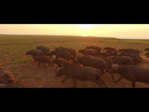Changa Safari Camp, Matusadona National Park, Zimbabwe