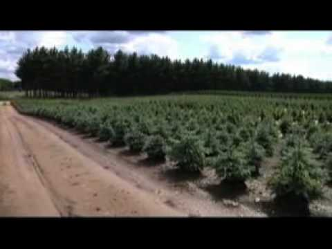 behind the scenes at a christmas tree farm youtube - Christmas Tree Farm Near Me