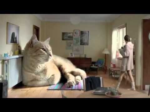 Самый огромный кот