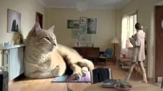 Самый большой кот в мире!:)