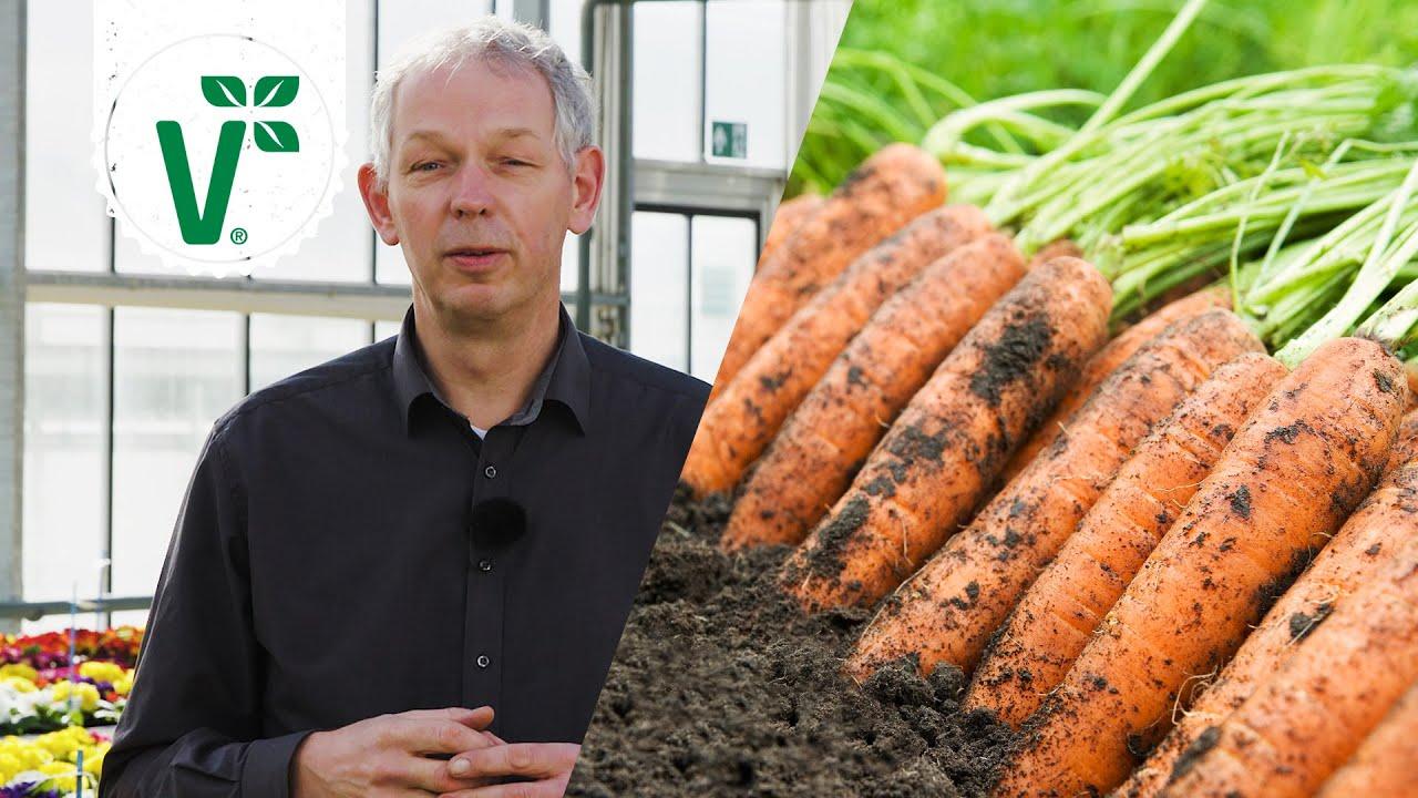 Welches Gemüse Im August Pflanzen