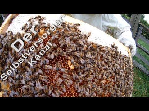 Probleme bei der Bienenhaltung