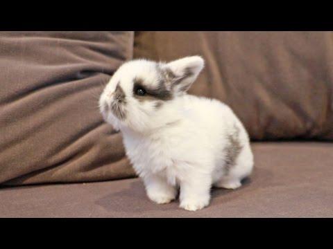 Curious Baby Bunny