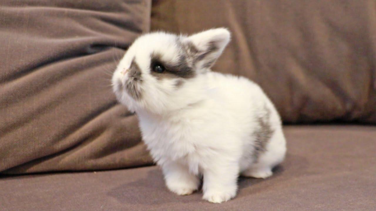 Curious Baby Bunny - YouTube