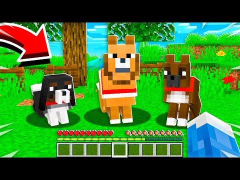 14 CUTE DOGS MINECRAFT SHOULD ADD!