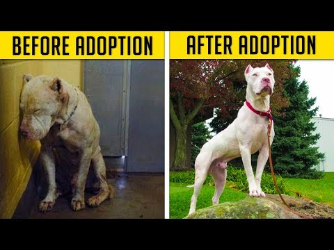 dogs adoption