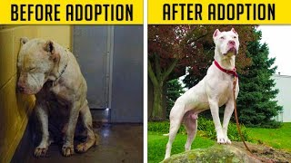 Dogs Before & After Their Adoption That Will Melt Your Heart