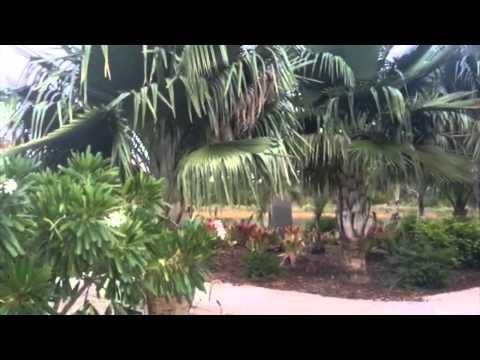 The Caribbean Garden