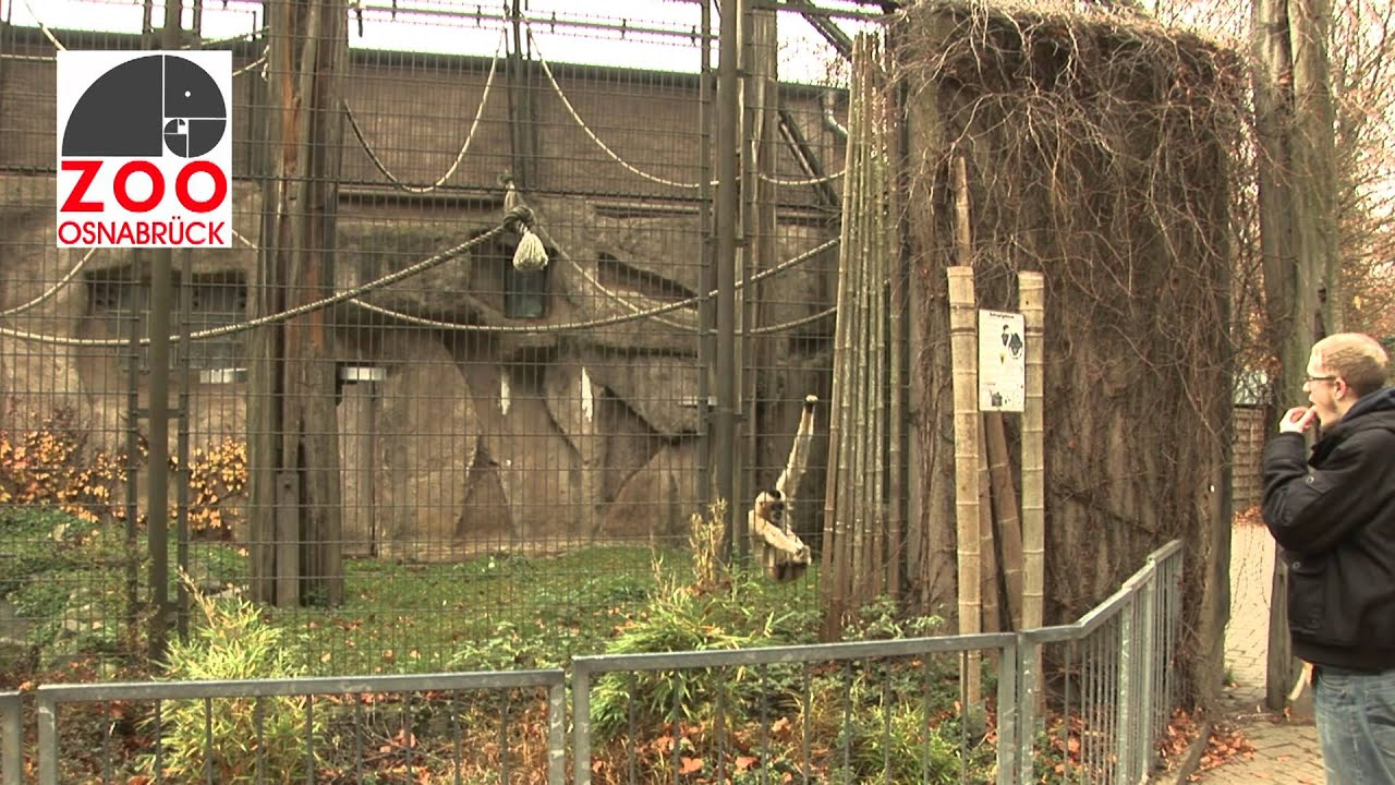vergünstigte jahreskarte zoo osnabrück