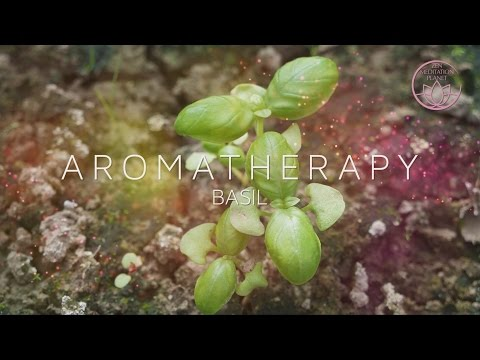 Aromatherapy Scent of Life - Basil Essential Oil, Background Instrumental Music