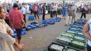להרוויח 30 שקל ליום: הדייגים בעזה לא מצליחים להתקיים