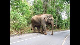 Elefantes en Tailandia, Turismo Responsable. El mejor Lugar. LIBRES !!