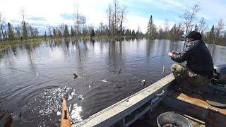 Рыба пошла в сеть Проверка сетей в затопленной тайге Хороший улов рыбы