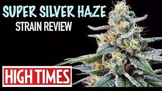 Strain Review: Super Silver Haze (Cup Winner)