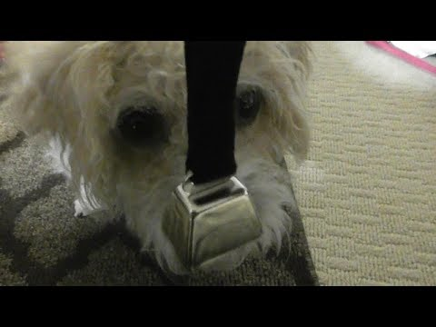 dog-training-potty-training-coastal-pet---nickel-cow-bell-with-nylon-strap-remington-bell-review