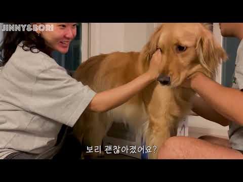 [I DOG CARE] 골든리트리버 사용 영상! ( 애견 유튜버 Jinny & Bori )