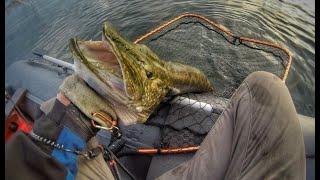 ЩУКА И ОКУНЬ РАЗРЫВАЮТ МИКРОДЖИГ. Рыбалка на ультралайтовый спиннинг.