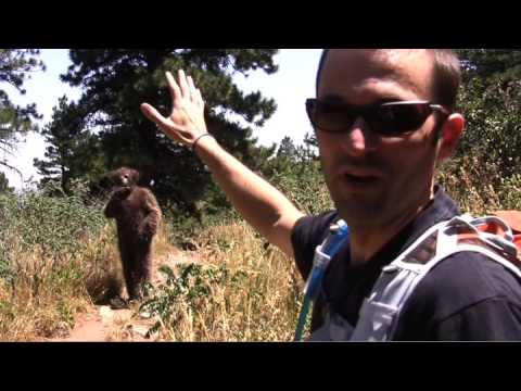 Backpacker Survival Skills: Survive a Bear Attack!