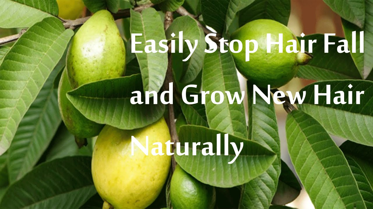 How To Stop Hair Fall Naturally At Home In Marathi
