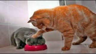 Смешные коты кошки и другие животные funny cats 2019 НЕЛЬЗЯ УНЫВАТЬ КРУТЫЕ КОШЕЧКИ