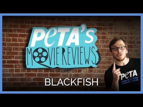 Blackfish: PETA Reviews The Documentary About SeaWorld