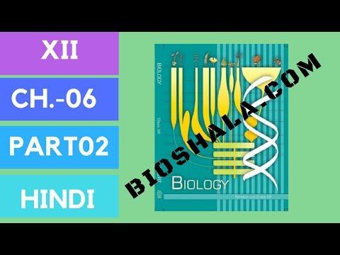 Chapter 6: Molecular basis of inheritance (NCERT level/ HINDI) Part 2 thumbnail