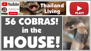 56 Deadly COBRAS in the HOUSE - 1 In the Bed!