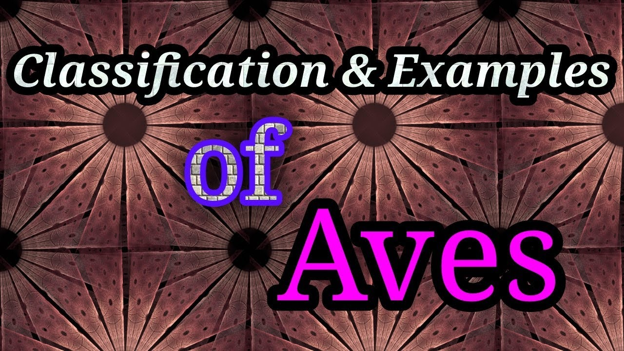 classification of aves upto order youtube