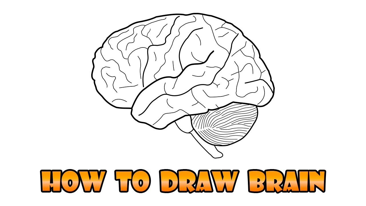 how to use right brain to draw