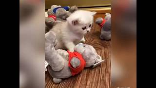Продажа котят Омск
