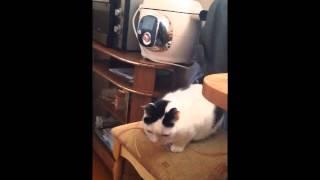 Памяти любимого кота Мартына посвящается.