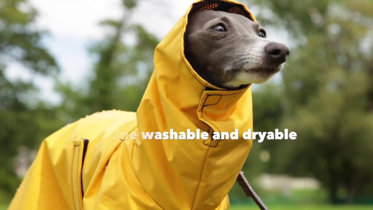 Our Best Rated Warm Dry Dog Rain Coat Dogcoats Com
