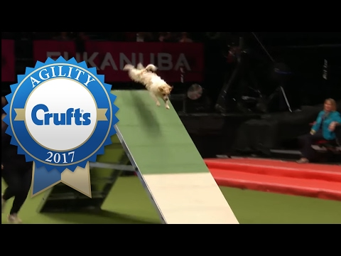 Thumbnail: Rescue Dog Agility (ft. Olly the Jack Russell!) | Crufts 2017