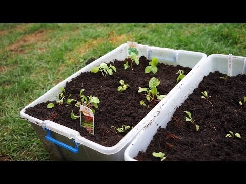 how-to-turn-$3-storage-containers-into-an-edible-garden