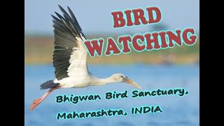Bird Watching | Bhigwan - Best Bird Watching place | Bharatpur of Maharashtra