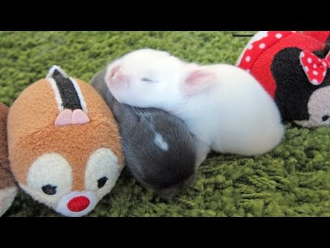 Stacking Cute Baby Bunnies - Tsum Tsum!