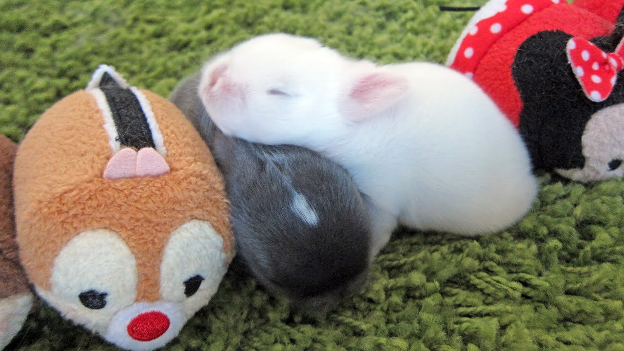 tsum cute baby bunnies stacking