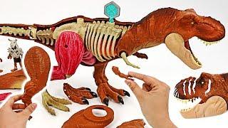 A giant dinosaur is alive! Jurassic World Tyrannosaurus Rex Anatomy assemble Kit! #DuDuPopTOY