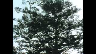 1990年放送。山本周五郎原作。伊達家お家騒動を題材にしたドラマ。