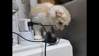 Самая смешная подборка про котов!!! Приколы с котами март  2017 ТОП видео(Cats LIVE)