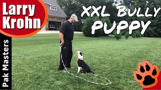 XXL Bully Puppy First day of training / learning to learn