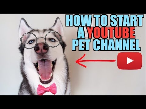 How To GROW YOUR CHANNEL And Make Money By Filming Your Pets!