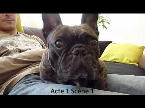 The singing French Bulldog !