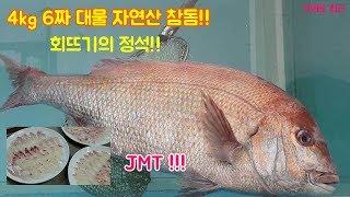 4kg 6짜 자연산 대물 참돔회뜨기 영상, 회뜨는법, …